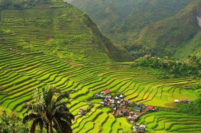 Batad Rice Terraces: 2013